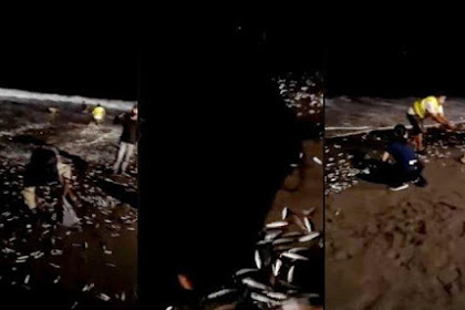 Viral Video Ribuan Ikan Lompat ke Daratan sebelum Terjadi Gempa 6,0 SR Pagi Ini