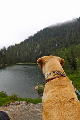dog looking at lake