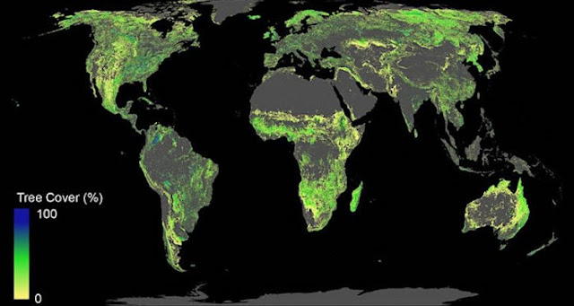 Adding one billion hectares of forest could help control global warming