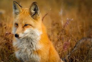 Daur hidup hewan dengan contohnya