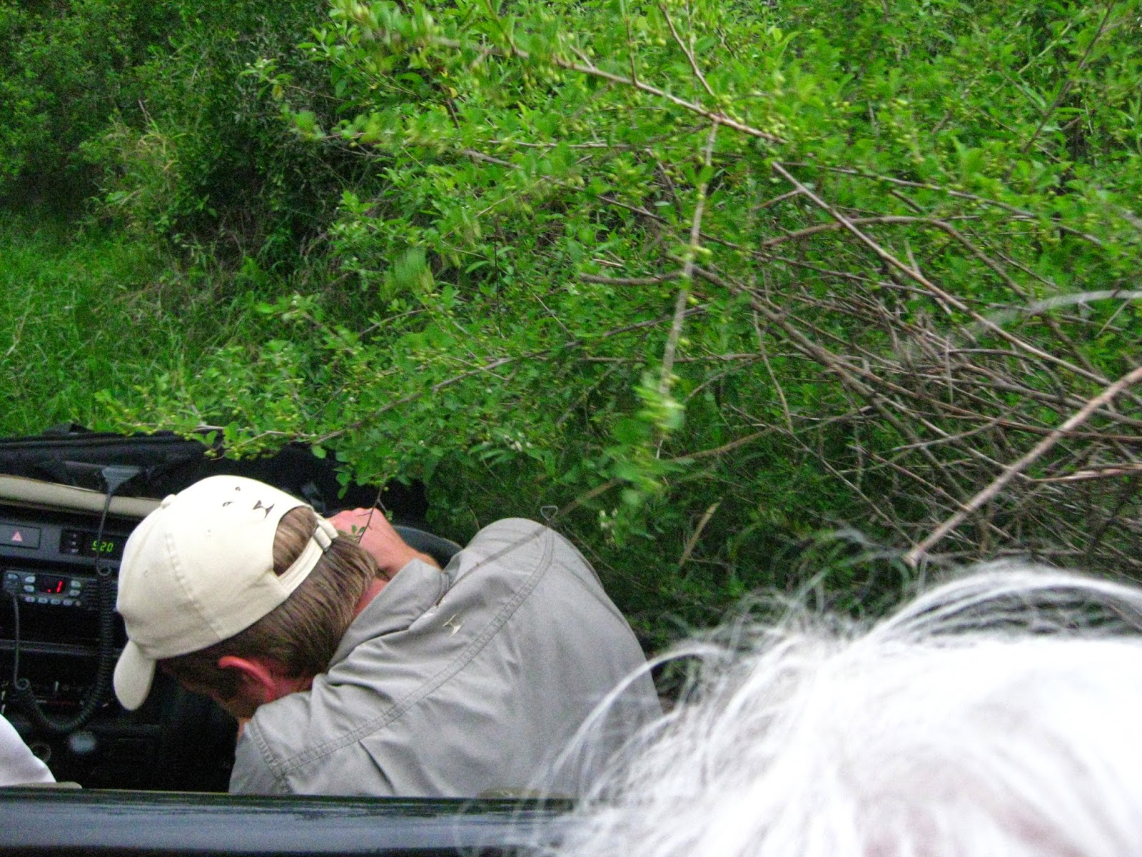 Sabi Sands - We have to do some off-roading through bushes