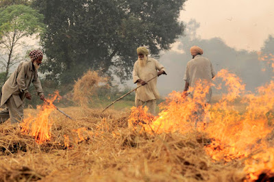 Farmers burning the stubble