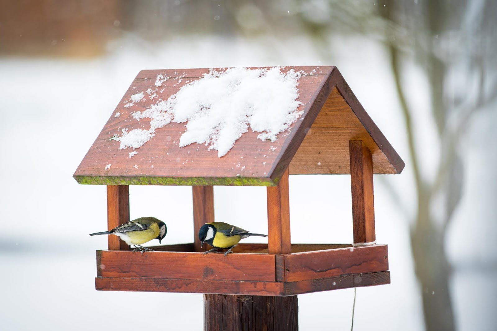 DIY Wood Bird Feeder
