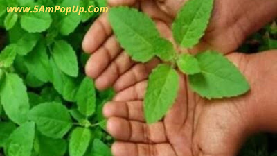 Indian Home Remedy For Skin Allergy | स्किन एलर्जी के घरेलू उपचार