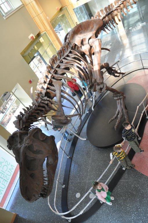 Lsu Museum Of Natural Science Hours