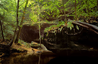 An image of forest in Dismals Canyon, Phil Campbell, AL