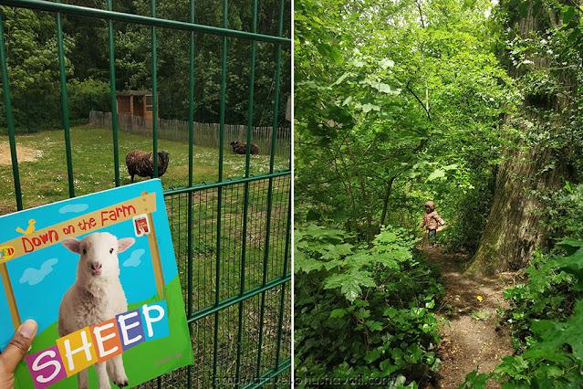 Roodebeek Petting Zoo Animal Farm Brussels