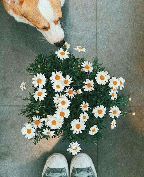 Cún Ngắm Hoa