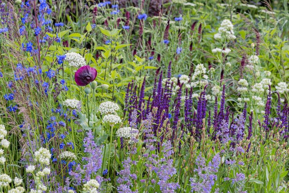 Herbaceas de flor en color azul, morado, blanco y carmesí
