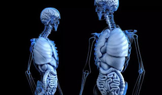 Amazing-facts-about-human-body