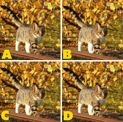 Which image is different? image 26