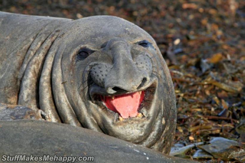 Best Smile Animal images: World's Happiest Animals That Make You Smile