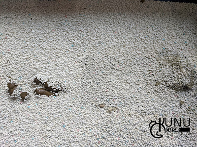 Penggunaan Pasir Gumpal Papin Hari Kedua