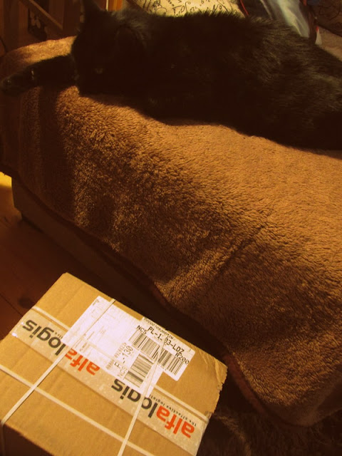 Czarna Owca, czarny kot i książki