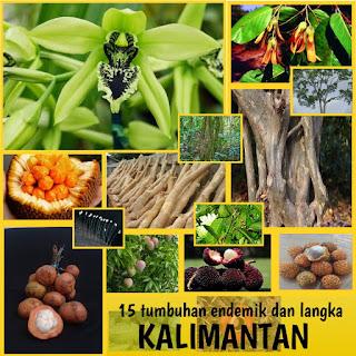 15 tumbuhan endemik kalimantan dan tumbuhan langka kalimantan