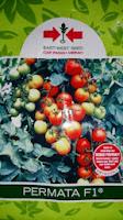 tomat permata f1, tomat dataran rendah, cap panah merah, menanam cabe, jual benih cabe, toko pertanian, toko online, lmga agro