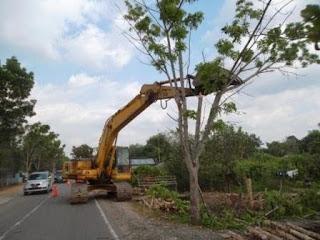 pembersihan pohon