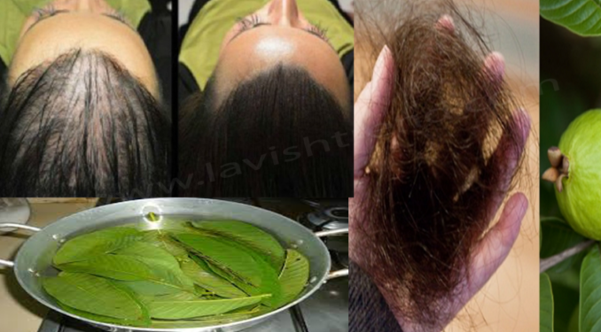 These Leaves Are A Miracle Of Nature, They Stop Hair Loss And Push Them Back