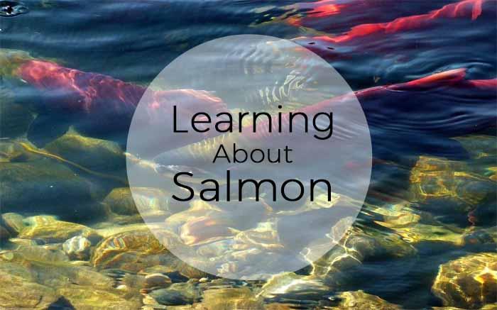 Ideas and Freebies for a 1st Grade Salmon Unit: Salmon Books, Salmon Mural, Lifecycle Wheel, Salmon Art.