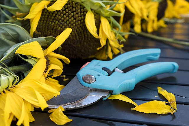 pruning-shears-tool-gardening.jpg