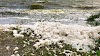 What Causes Foam in the Indian River Lagoon?