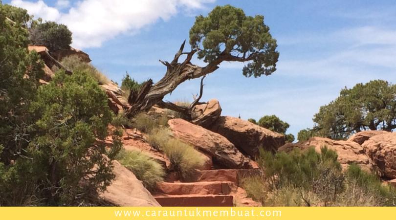 Juniper Tree on Canyonlands 8