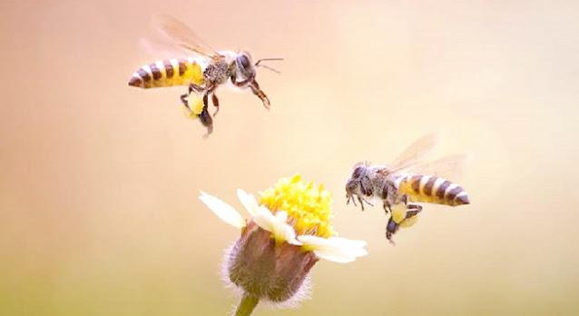 Beginilah Allah Menciptakan Lebah, 'Sang Ratu' Kawin Satu Kali Untuk Selamanya