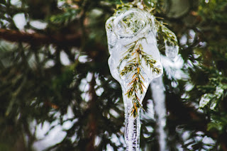 A pine branch encased in ice. By Sarah Cervantes on Unsplash.