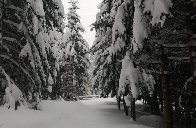 Colle Melosa sotto al neve