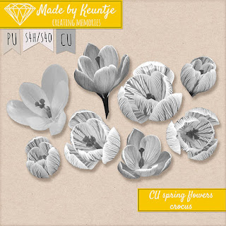 CU spring flowers: Crocus