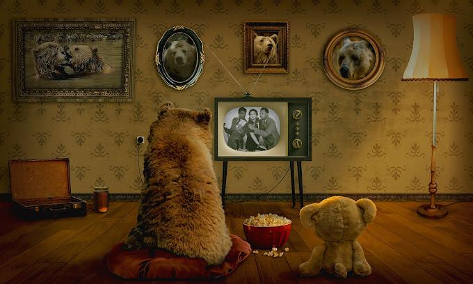 Ursos de pelúcia vendo TV