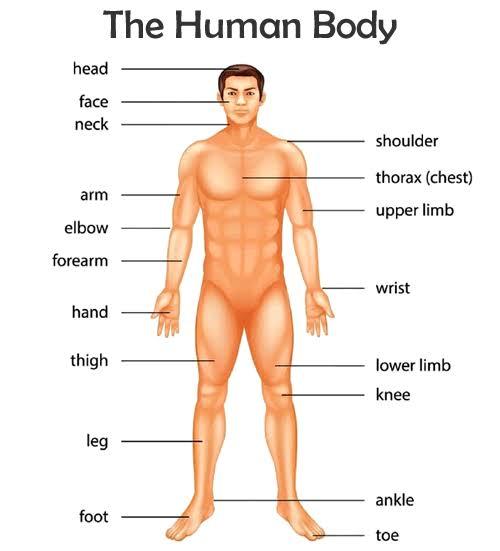 मानव शरीर  से संबंधित प्रश्न-(2) [human body related questions]