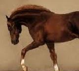 Short Essay On Horse | Paragraph On Horse | Horse Essay
