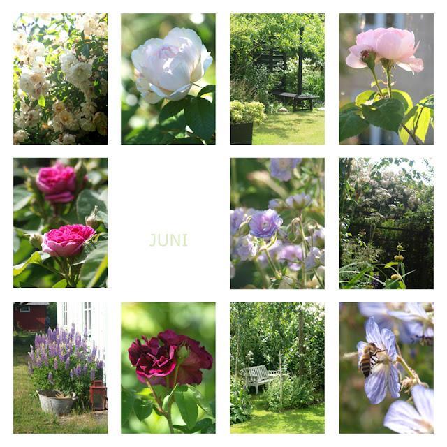 Året i haven 2016 - juni
