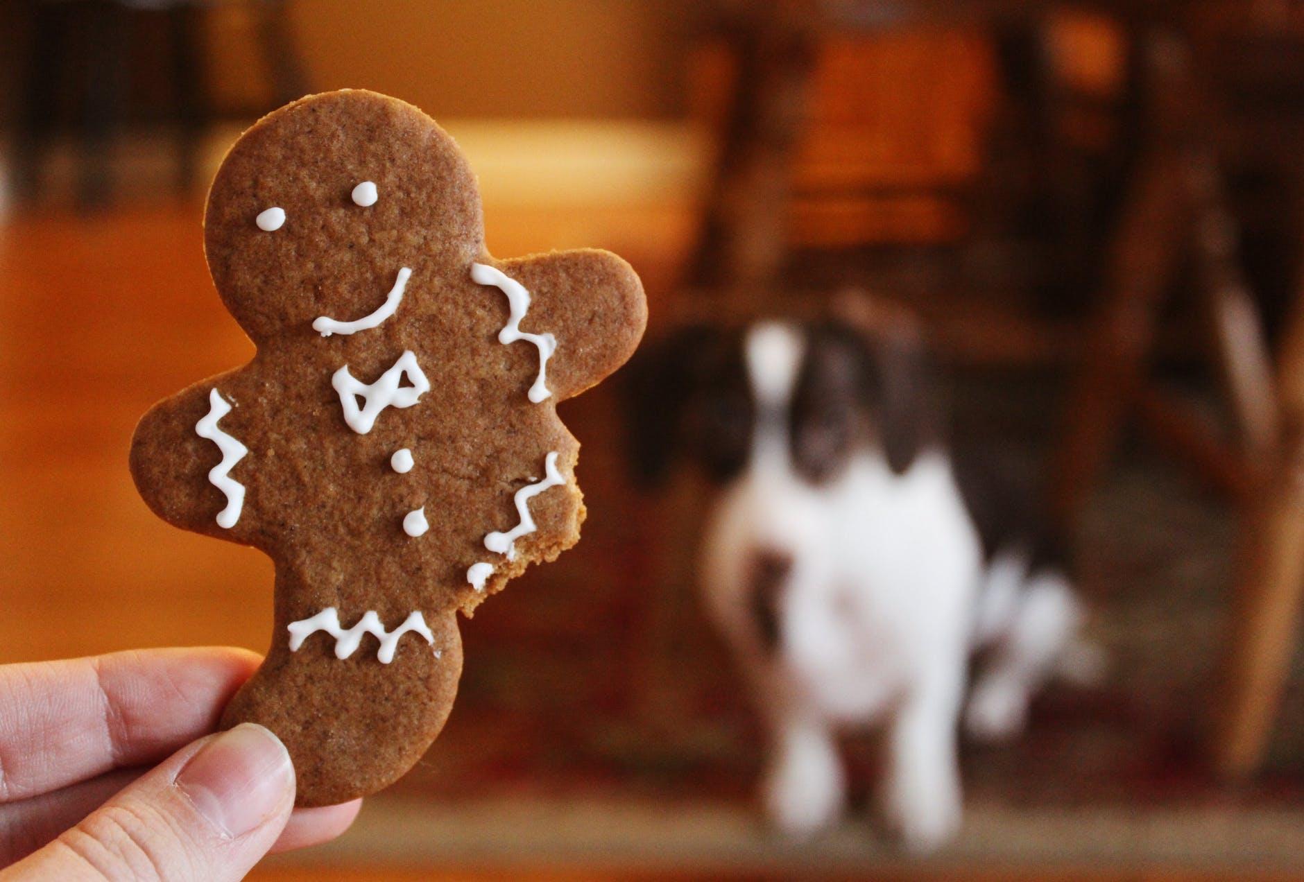 Nourriture pour chien et perte d'appétit