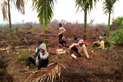 Warga Desa Teluk Marbau Tuding PT SAL 'Serobot' Lahan di Perbatasan Desa