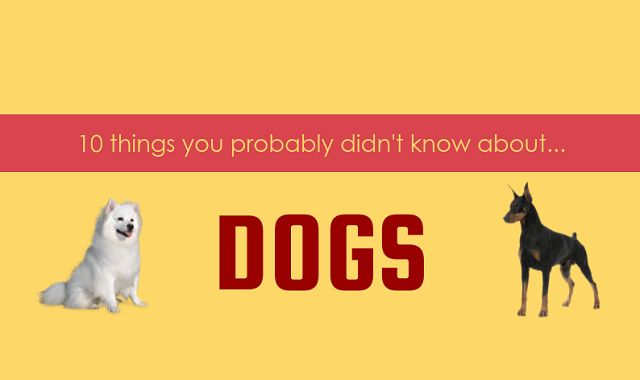 10 Things You Didn't Know About Dogs