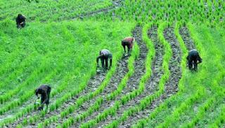 Return Jonathan's GES Scheme Farmers Tells Buhari