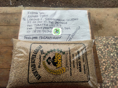 Benih padi yang dibeli   ANWAR SYAM Jeneponto, Sulsel.  (Sebelum packing karung).