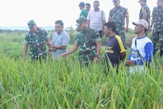 Dandim Tanjab Tinjau Areal Persawahan di Desa Rawa Medang