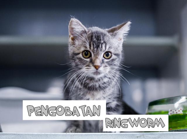 Salep Ringworm Kucing