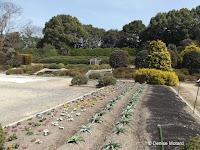 New flower beds, Sunken Garden - Kyoto Botanical Gardens, Japan