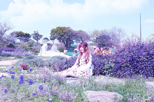 uminonakamichi seaside park sakura