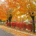 Khám phá khung cảnh mùa thu tuyệt vời tại Canada