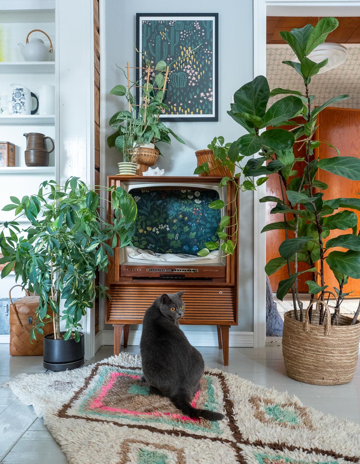 kissanpeti vanhasta televisiosta