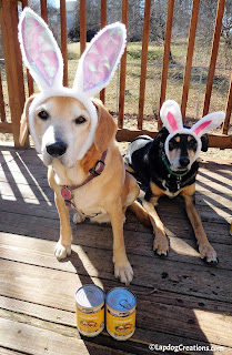 Sophie & Teutul are all ears for #Merrick Easter Brunch seasonal recipes #dogfood #BestDogEver #rescueddogs #seniordog #adoptdontshop #LapdogCreations ©LapdogCreations