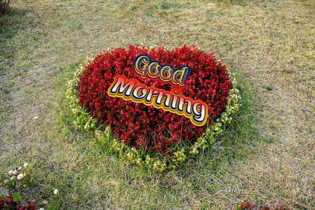 Awesome good morning image heart shape flowers