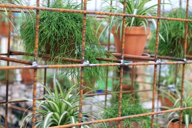 Plants on upcycled metal shelving