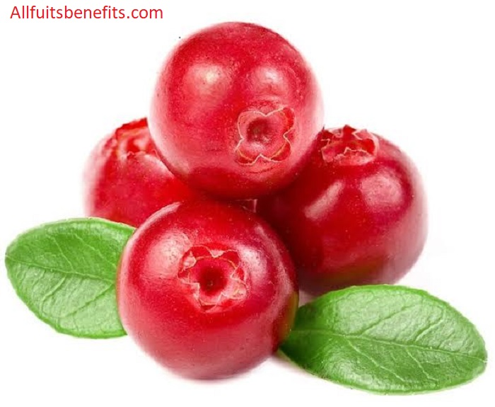 cranberry juice health benefits side effects,benefits of raw cranberry juice,cranberry water benefits,organic dried cranberries benefits,hot cranberry juice benefits,health benefits of unsweetened cranberry juice,cranberry pomegranate tea benefits,cranberry pomegranate benefits,cranberry juice 21st century benefits,health benefits of fresh cranberries,cranberry juice side effects diarrhea,cranberry black cherry juice benefits,cranberry cocktail juice benefits,the effects of cranberry juice,aloe vera and cranberry juice benefits,health benefits for cranberry juice,cranberry juice not from concentrate benefits,benefits of natural cranberry juice,the benefits of dried cranberries,health benefits of 100 cranberry juice,pink cranberry juice benefits,cranberry cherry juice benefits,benefits of diet cranberry juice,fontana cranberry juice benefits,african cranberry benefits,cranberry and raspberry juice benefits,benefits of cranberry and raspberry juice,benefits of cranberry chews,just cranberry juice health benefits,langers cranberry juice health benefits