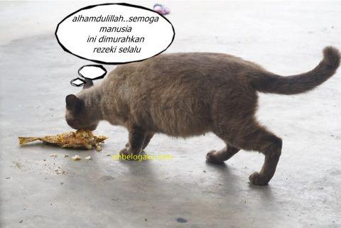 street cat, kucing terbiar, kucing siam, kucing bunting